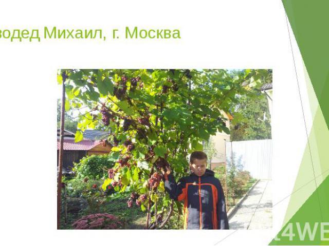 Сиводед Михаил, г. Москва