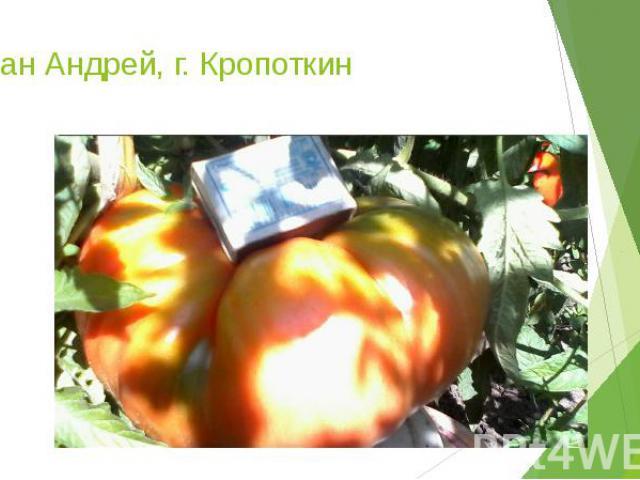 Таран Андрей, г. Кропоткин