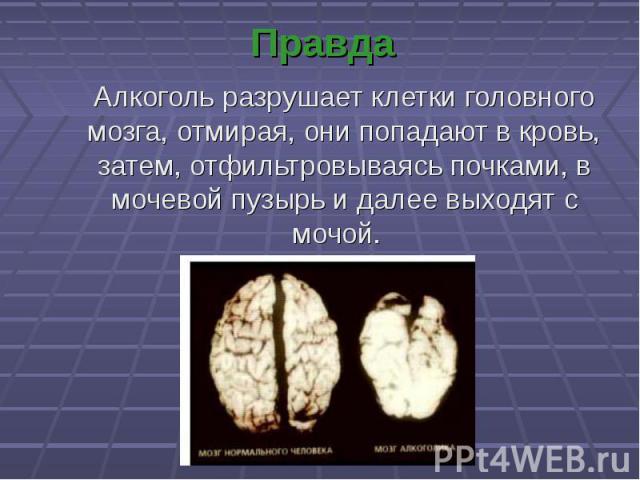 Алкоголь разрушает клетки головного мозга, отмирая, они попадают в кровь, затем, отфильтровываясь почками, в мочевой пузырь и далее выходят с мочой. Алкоголь разрушает клетки головного мозга, отмирая, они попадают в кровь, затем, отфильтровываясь по…