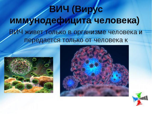 ВИЧ (Вирус иммунодефицита человека) ВИЧ живет только в организме человека и передается только от человека к человеку