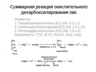 Суммарная реакция окислительного декарбоксилирования пвк Ферменты: 1. Пируватдек