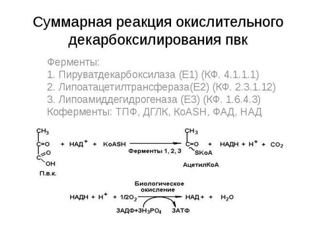 Суммарная реакция окислительного декарбоксилирования пвк Ферменты: 1. Пируватдекарбоксилаза (Е1) (КФ. 4.1.1.1) 2. Липоатацетилтрансфераза(Е2) (КФ. 2.3.1.12) 3. Липоамиддегидрогеназа (Е3) (КФ. 1.6.4.3) Коферменты: ТПФ, ДГЛК, КоАSН, ФАД, НАД