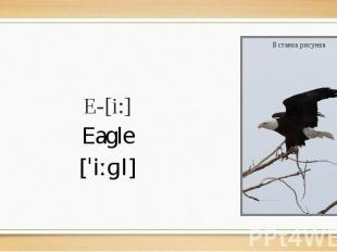 E-[i:] Eagle [ˈiːɡl]