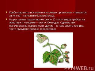 Грибы-паразиты поселяются на живых организмах и питаются за их счёт, нанося им б