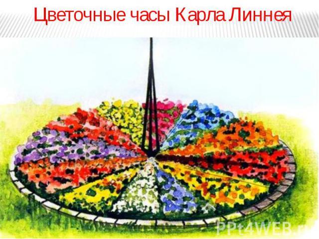 Цветочные часы Карла Линнея Цветочные часы Карла Линнея