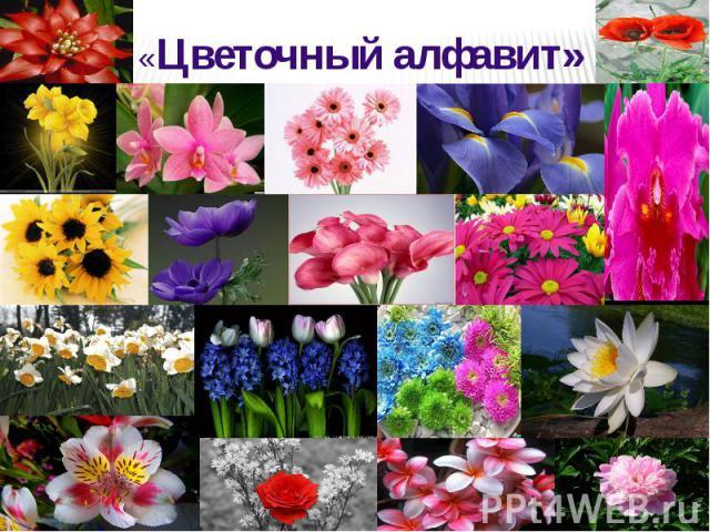 «Цветочный алфавит» «Цветочный алфавит»