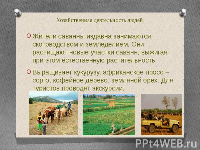 Хозяйственная деятельность людей Жители саванны издавна занимаются скотоводством и земледелием. Они расчищают новые участки саванн, выжигая при этом естественную растительность. Выращивает кукурузу, африканское просо – сорго, кофейное дерево, землян…