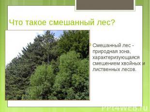 Смешанный лес - природная зона, характеризующаяся смешением хвойных и лиственных