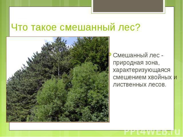 Смешанный лес - природная зона, характеризующаяся смешением хвойных и лиственных лесов. Смешанный лес - природная зона, характеризующаяся смешением хвойных и лиственных лесов.