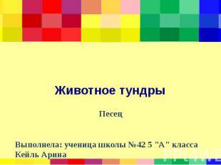 """Животное тундры Песец Выполнела: ученица школы №42 5 """"А"""" класса Кейль"""