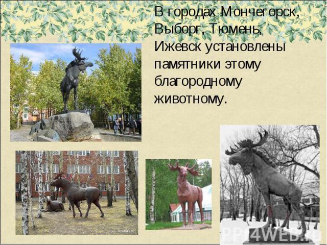 В городах Мончегорск, Выборг, Тюмень, Ижевск установлены памятники этому благородному животному.