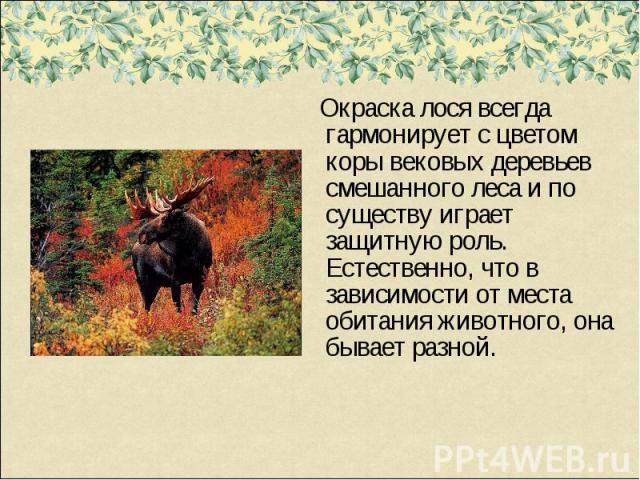 Окраска лося всегда гармонирует с цветом коры вековых деревьев смешанного леса и по существу играет защитную роль. Естественно, что в зависимости от места обитания животного, она бывает разной.