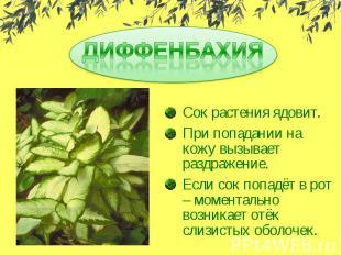 ДИФФЕНБАХИЯСок растения ядовит.При попадании на кожу вызывает раздражение.Если с