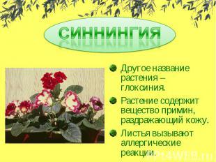 СИННИНГИЯДругое название растения – глоксиния.Растение содержит вещество примин,