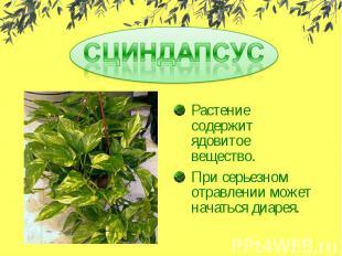 СЦИНДАПСУСРастение содержит ядовитое вещество.При серьезном отравлении может нач