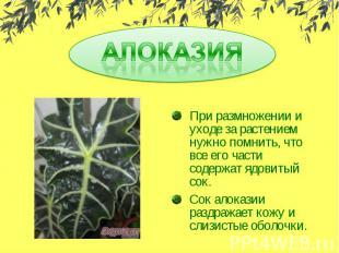 АЛОКАЗИЯ При размножении и уходе за растением нужно помнить, что все его части с