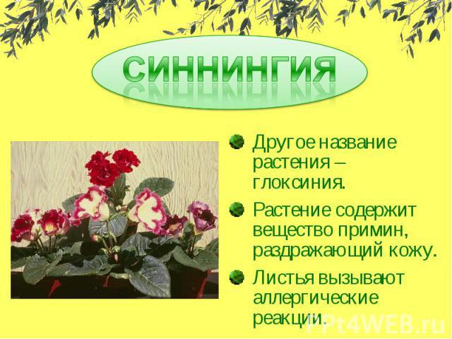 СИННИНГИЯДругое название растения – глоксиния.Растение содержит вещество примин, раздражающий кожу.Листья вызывают аллергические реакции.