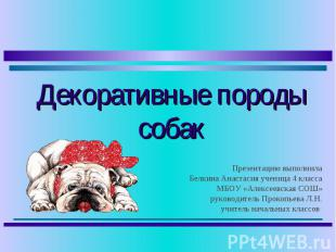 Декоративные породы собак Презентацию выполнила Белкина Анастасия ученица 4 клас