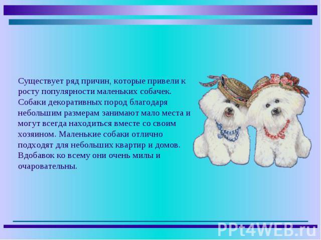 Существует ряд причин, которые привели к росту популярности маленьких собачек. Собаки декоративных пород благодаря небольшим размерам занимают мало места и могут всегда находиться вместе со своим хозяином. Маленькие собаки отлично подходят для небол…