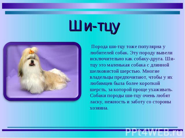 Порода ши-тцу тоже популярна у любителей собак. Эту породу вывели исключительно как собаку-друга. Ши-тцу это маленькая собака с длинной шелковистой шерстью. Многие владельцы предпочитают, чтобы у их любимцев была более короткой шерсть, за которой пр…