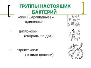 кокки (шаровидные) – кокки (шаровидные) – одиночные диплококки (собраны по два)