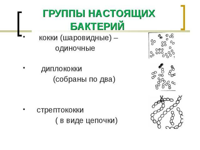кокки (шаровидные) – кокки (шаровидные) – одиночные диплококки (собраны по два) стрептококки ( в виде цепочки)