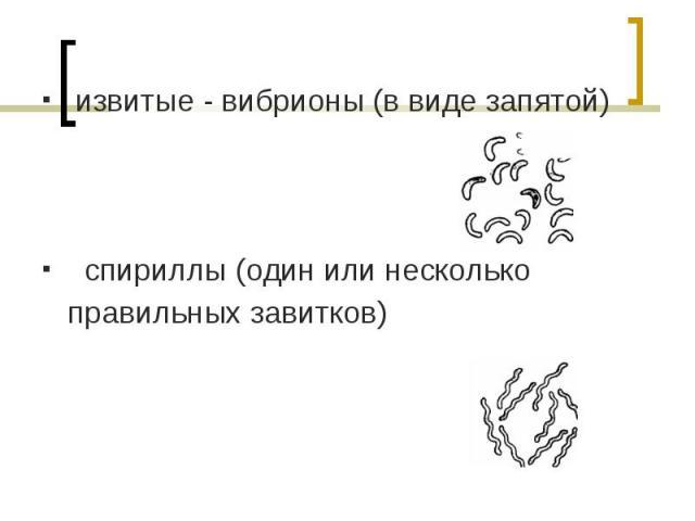 извитые - вибрионы (в виде запятой) извитые - вибрионы (в виде запятой) спириллы (один или несколько правильных завитков)