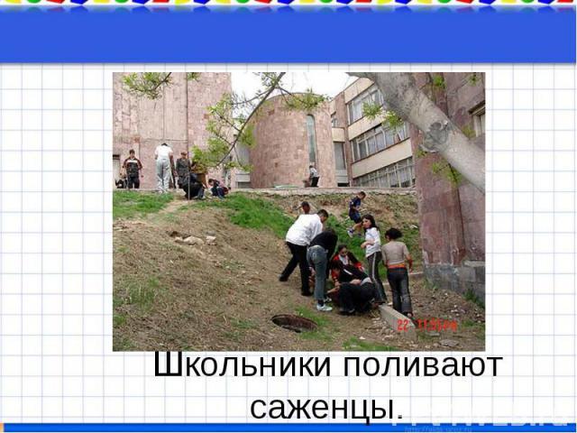 Школьники поливают саженцы.