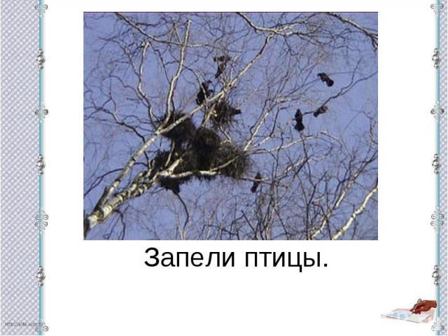 Запели птицы.