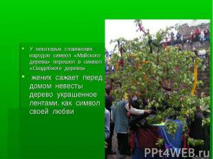 У некоторых славянских народов символ «Майского дерева» перешел в символ «Свадеб