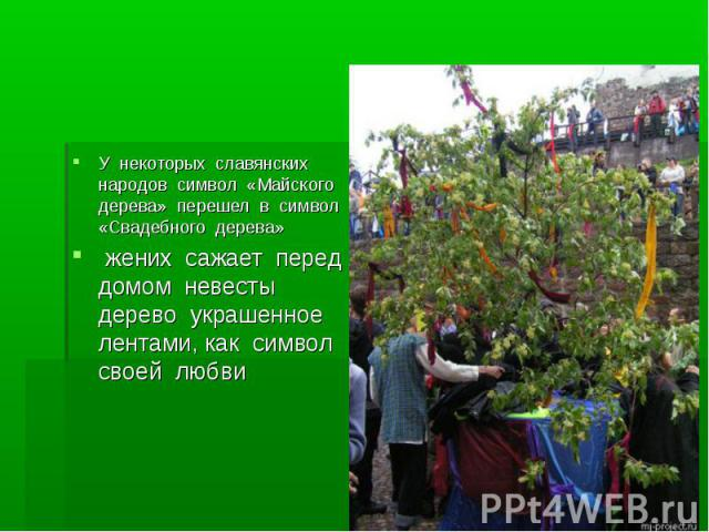 У некоторых славянских народов символ «Майского дерева» перешел в символ «Свадебного дерева» жених сажает перед домом невесты дерево украшенное лентами, как символ своей любви