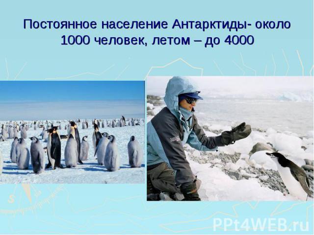 Постоянное население Антарктиды- около 1000 человек, летом – до 4000