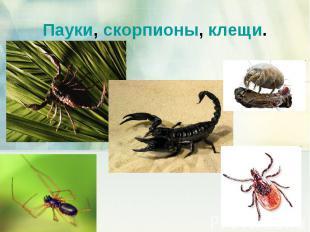Пауки, скорпионы, клещи.