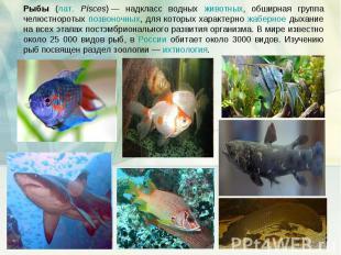 Рыбы (лат. Pisces)— надкласс водных животных, обширная группа челюстноротых поз