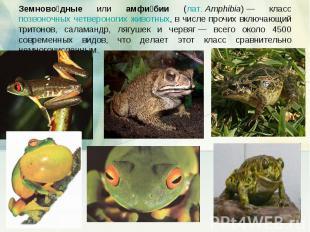 Земноводные или амфибии (лат.Amphibia)— класс позвоночных четвероногих животны
