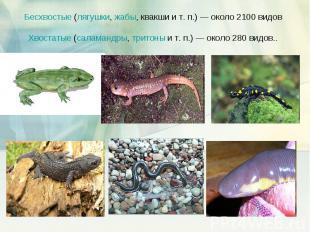 Бесхвостые (лягушки, жабы, квакши и т.п.)— около 2100 видов Хвостатые (саламан
