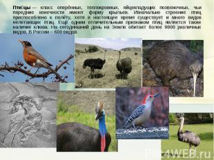 Птицы— класс оперённых, теплокровных, яйцекладущих позвоночных, чьи передние ко