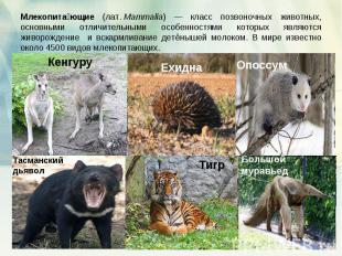 Млекопитающие (лат.Mammalia) — класс позвоночных животных, основными отличитель