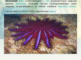 Иглокожие (лат. Echinodermata)— тип исключительно морских донных животных, боль