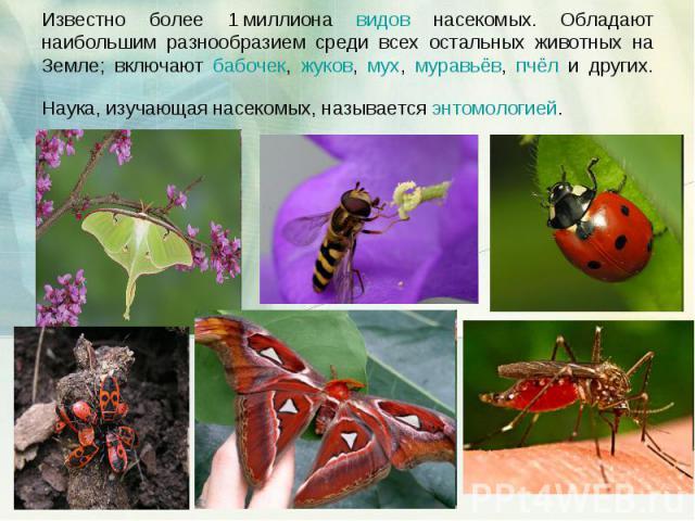 Известно более 1миллиона видов насекомых. Обладают наибольшим разнообразием среди всех остальных животных на Земле; включают бабочек, жуков, мух, муравьёв, пчёл и других. Наука, изучающая насекомых, называется энтомологией.