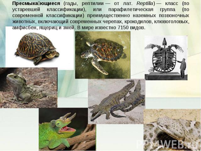 Пресмыкающиеся (гады, рептилии— от лат. Reptilia)— класс (по устаревшей классификации), или парафилетическая группа (по современной классификации) преимущественно наземных позвоночных животных, включающий современных черепах, крокодилов, клювоголо…