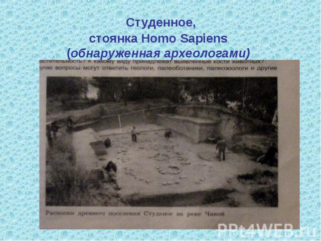 Студенное,стоянка Homo Sapiens(обнаруженная археологами)