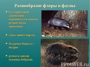 Разнообразие флоры и фауны На территории заповедник охраняются и многие редкие в