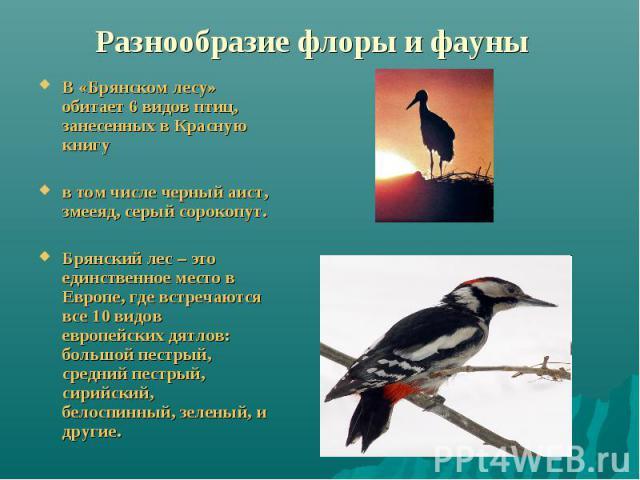 Разнообразие флоры и фауны В «Брянском лесу» обитает 6 видов птиц, занесенных в Красную книгув том числе черный аист, змееяд, серый сорокопут. Брянский лес – это единственное место в Европе, где встречаются все 10 видов европейских дятлов: большой п…
