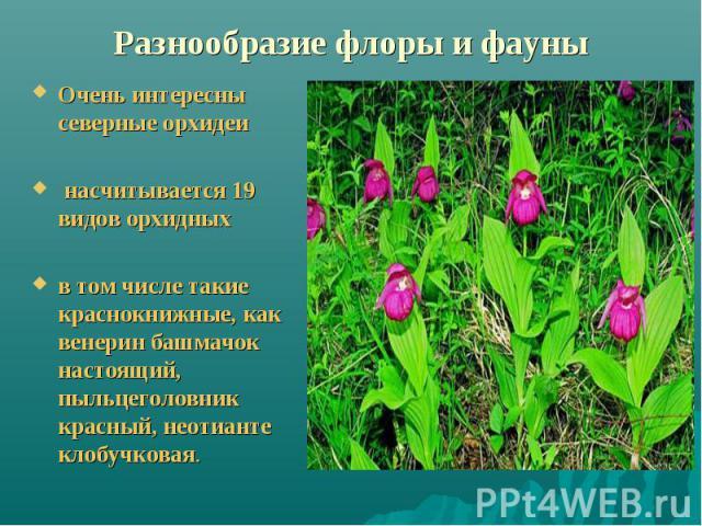 Разнообразие флоры и фауны Очень интересны северные орхидеи насчитывается 19 видов орхидныхв том числе такие краснокнижные, как венерин башмачок настоящий, пыльцеголовник красный, неотианте клобучковая.