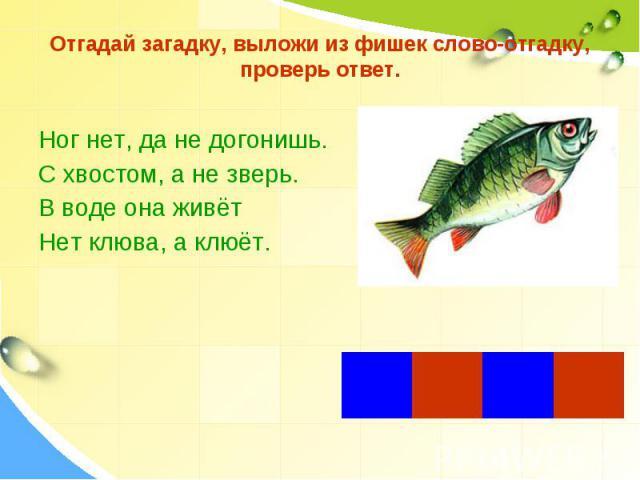 Отгадай загадку, выложи из фишек слово-отгадку, проверь ответ. Ног нет, да не догонишь.С хвостом, а не зверь.В воде она живётНет клюва, а клюёт.
