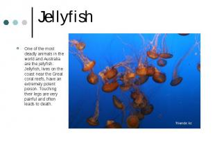 Jellyfish One of the most deadly animals in the world and Australia are the jell