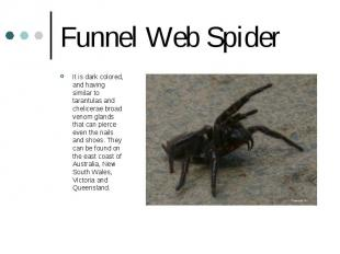 Funnel Web Spider It is dark colored, and having similar to tarantulas and cheli