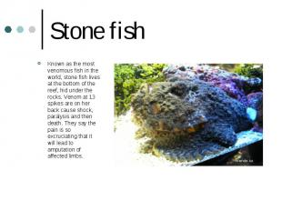 Stone fish Known as the most venomous fish in the world, stone fish lives at the