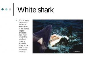 White shark This is a very large shark known as white death, is the world's larg